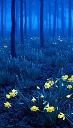 Cây cỏ huyền bí - Thiếu Nhi