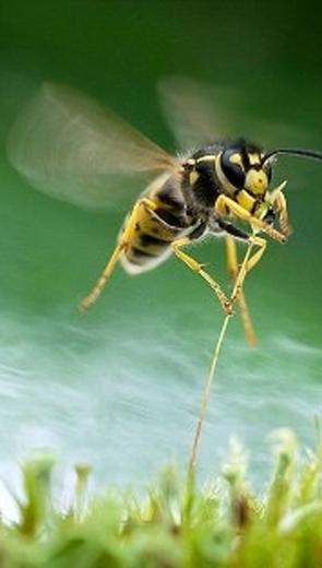 Tiếng ong bay - Văn học - Tiểu thuyết