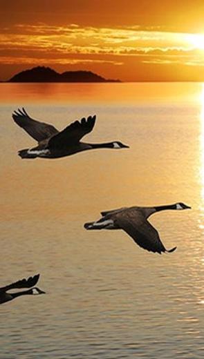 Bóng đàn chim dưới nước - Văn học - Tiểu thuyết