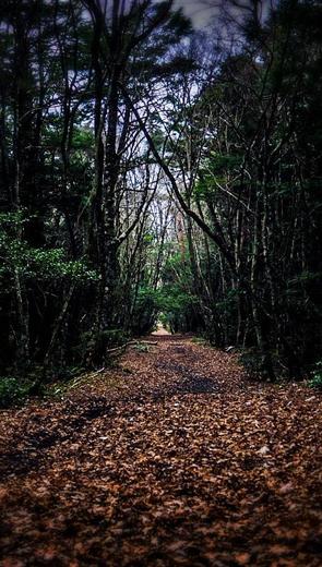 Lối đi dưới hàng cây lạnh lẽo - Văn học - Tiểu thuyết
